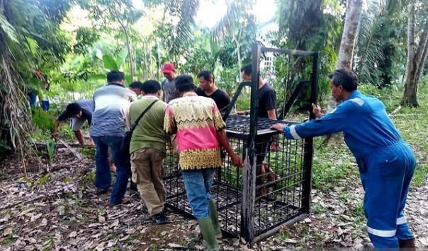 Tim Rescue BBKSDA Riau bersama warga memasang perangkap untuk beruang madu liar di Kecamatan Mandau Kabupaten Bengkalis/ant