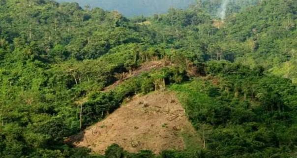 Deforestasi pads 20017-2018. ( int)