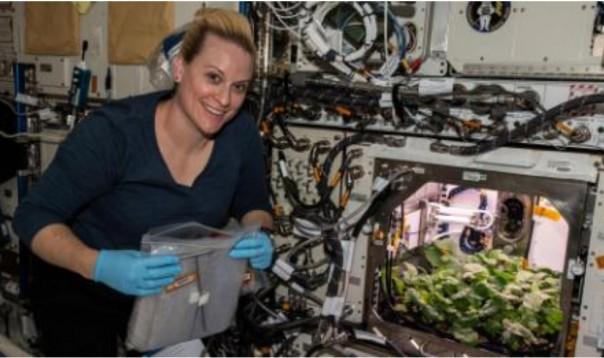 Astronot memann lobak yang ditanam di Stasiun Luar Angkasa Internasional.Astronot NASA Kate Rubins mengumpulkan tabung yang berisi sampel swab mikroba di stasiun luar angkasa.(FOTO: CNN)