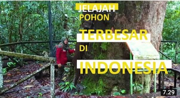 Joom Melala | Melihat Pohon Ulin Raksasa di Taman Nasional Kutai, Kalimantan Timur